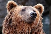 """【脑科学与教育】你可能误会""""熊孩子""""了"""